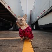pet friendly trucking company
